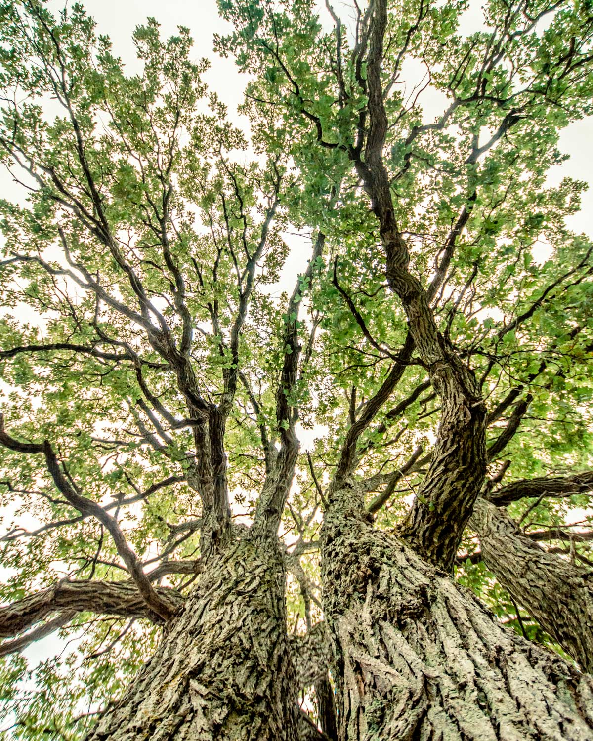 Low angle photo of a tree suggesting gesture.