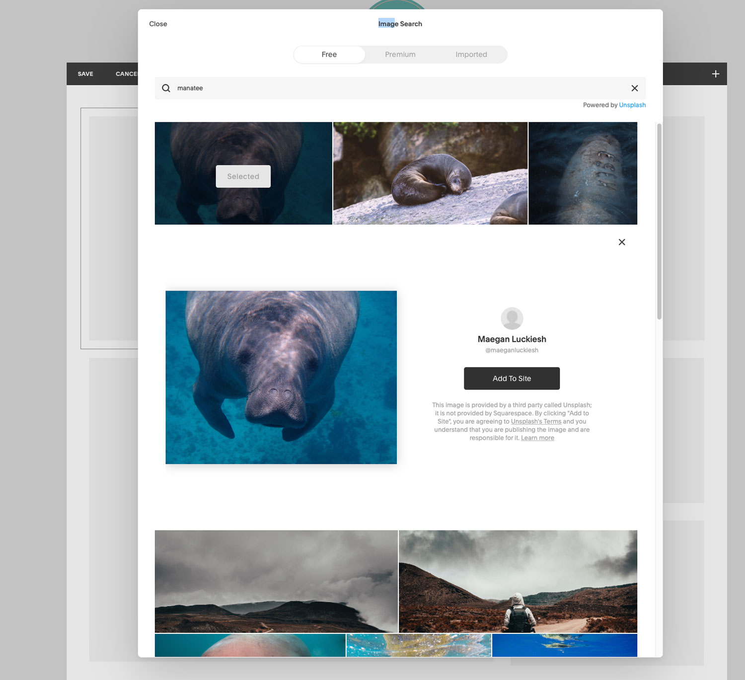 Image: Built into Squarespace. It is simple and easy to get copyright-free images.