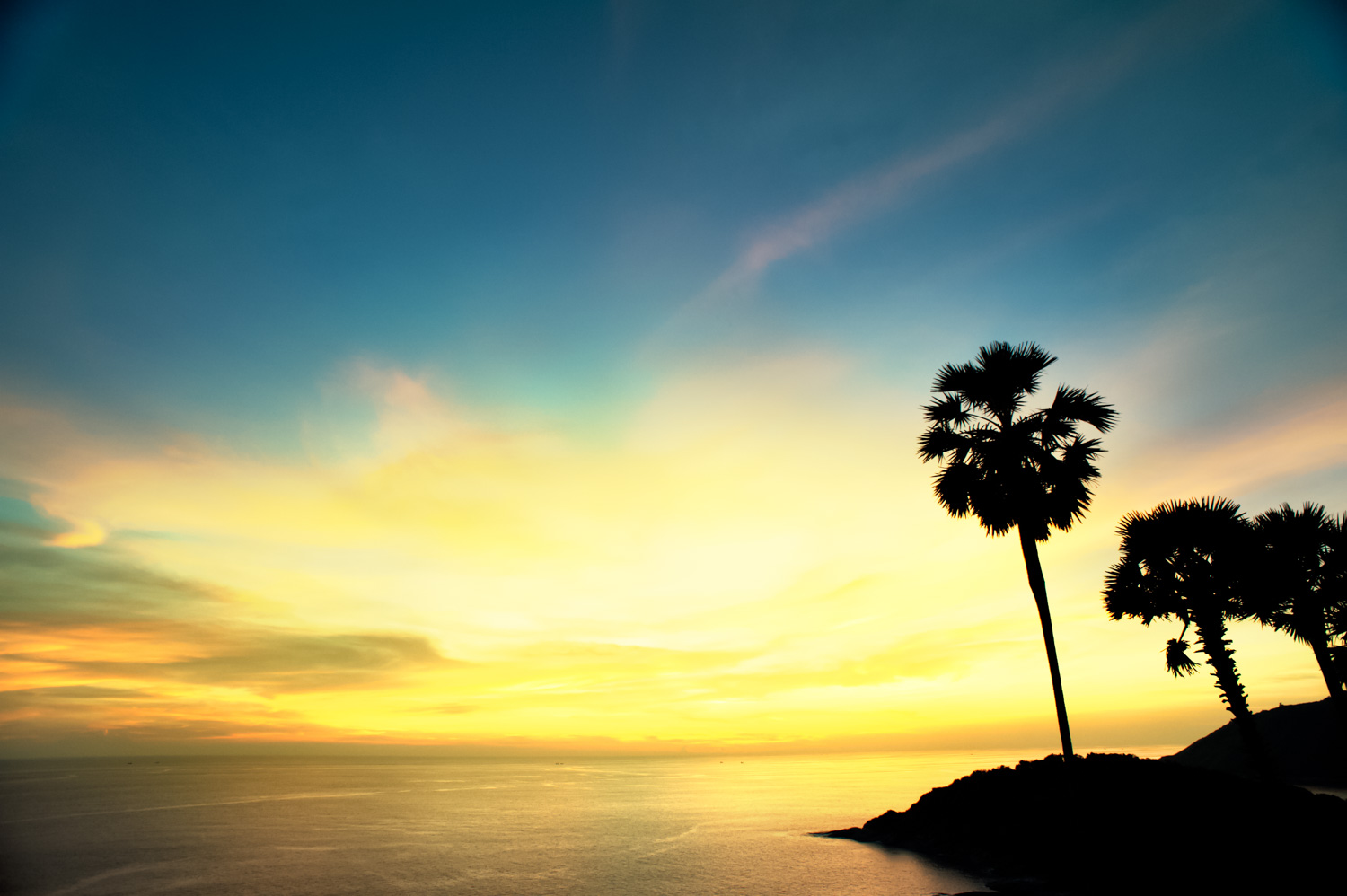 21 Tips For Stock Photography Tropical Palm Tree Sunset