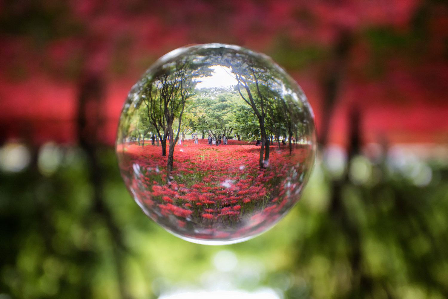 Image: Lensball photography is a lot of fun, this photo has used post processing to make the ball...