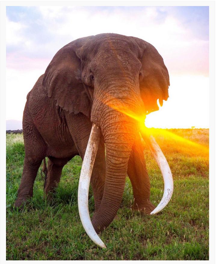 elephant unedited photo