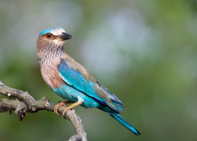 Birds DIGITAL PICTURE//PHOTO//IMAGE//WALLPAPER//DESKTOP JPEG