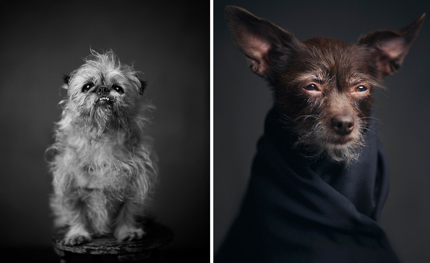animal-portraits