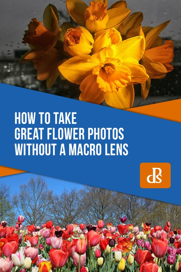 How to take Great Flower Photos without a Macro Lens