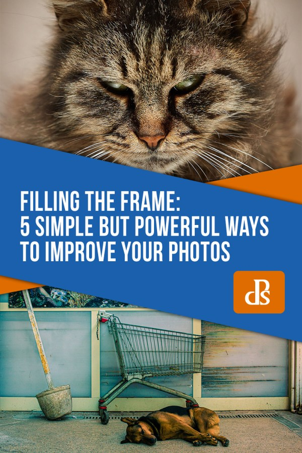 Filling the Frame: 5 Simple Yet Powerful Ways to Improve Your Photos