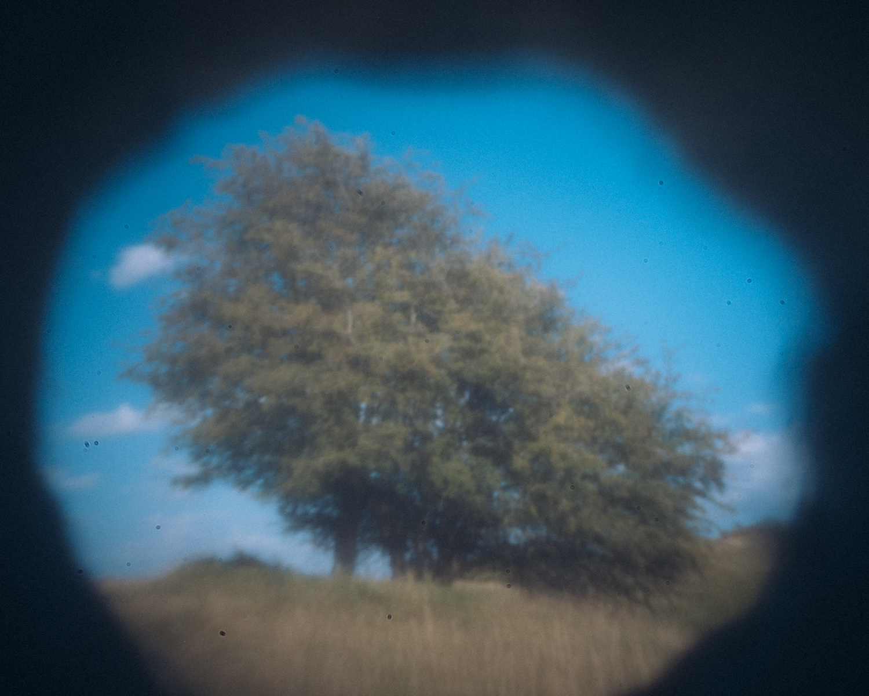 tree in pinhole shot