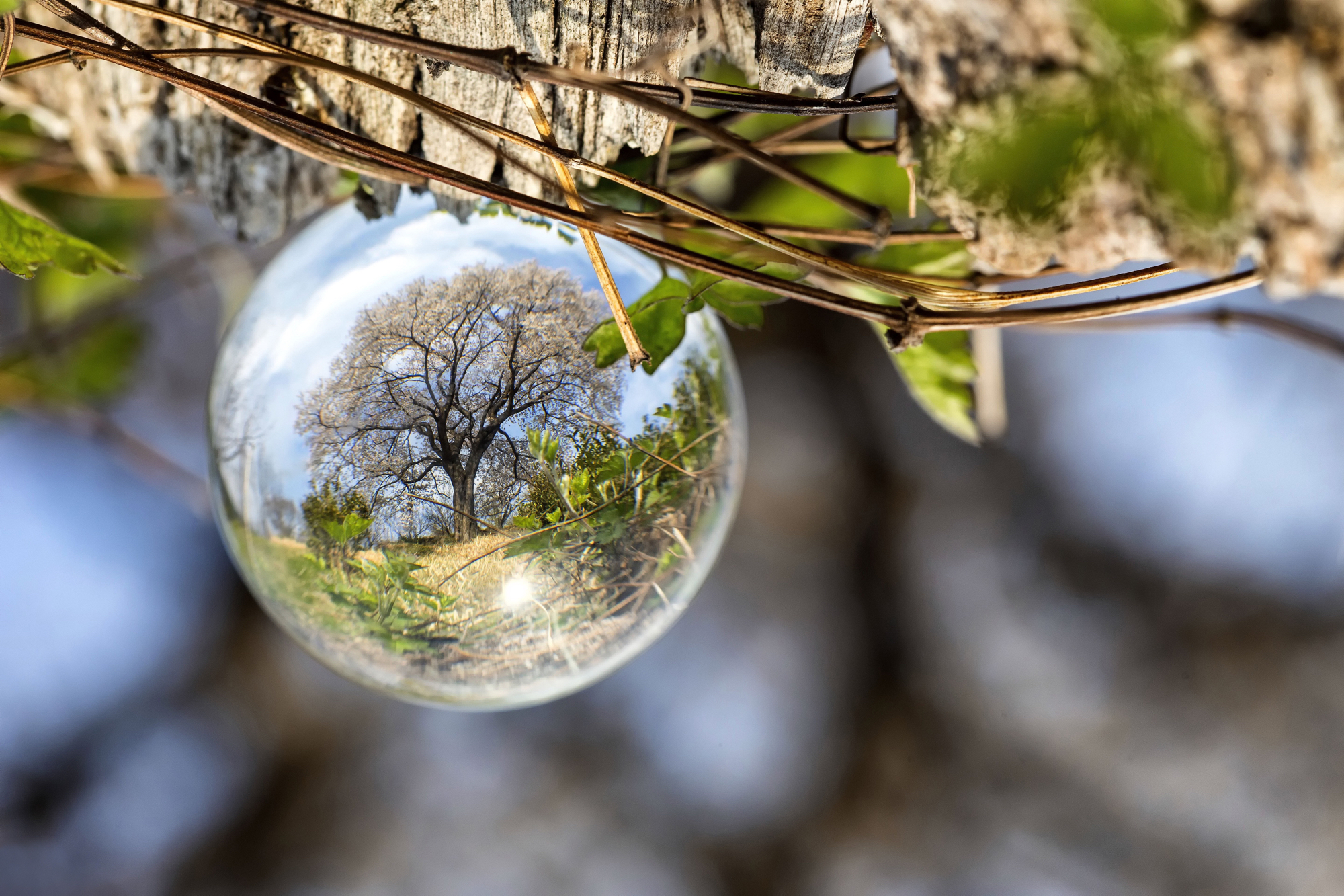 9 Great Lensball Perspectives for Creative Photography!