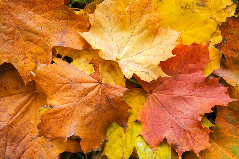 Autumn Colors 06