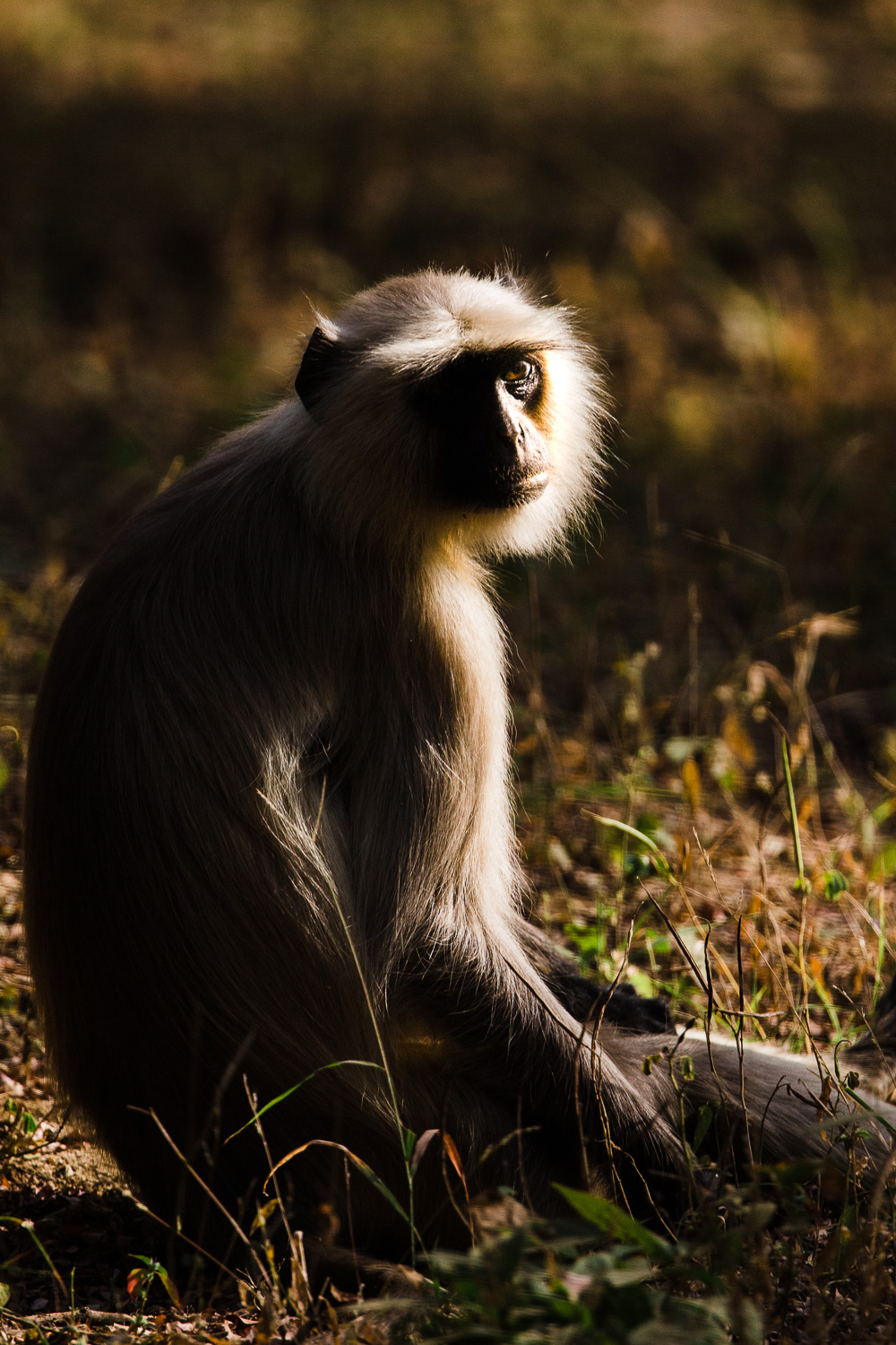 Image: Animals during a safari in harsh mid-day sun. Here I tried to use the contrast of shadows and...