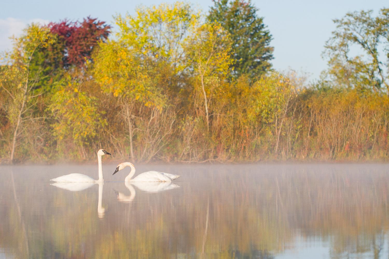 amazing-bird-photography-compositions