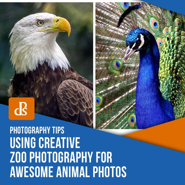 Using Creative Zoo Photography for Awesome Animal Photos