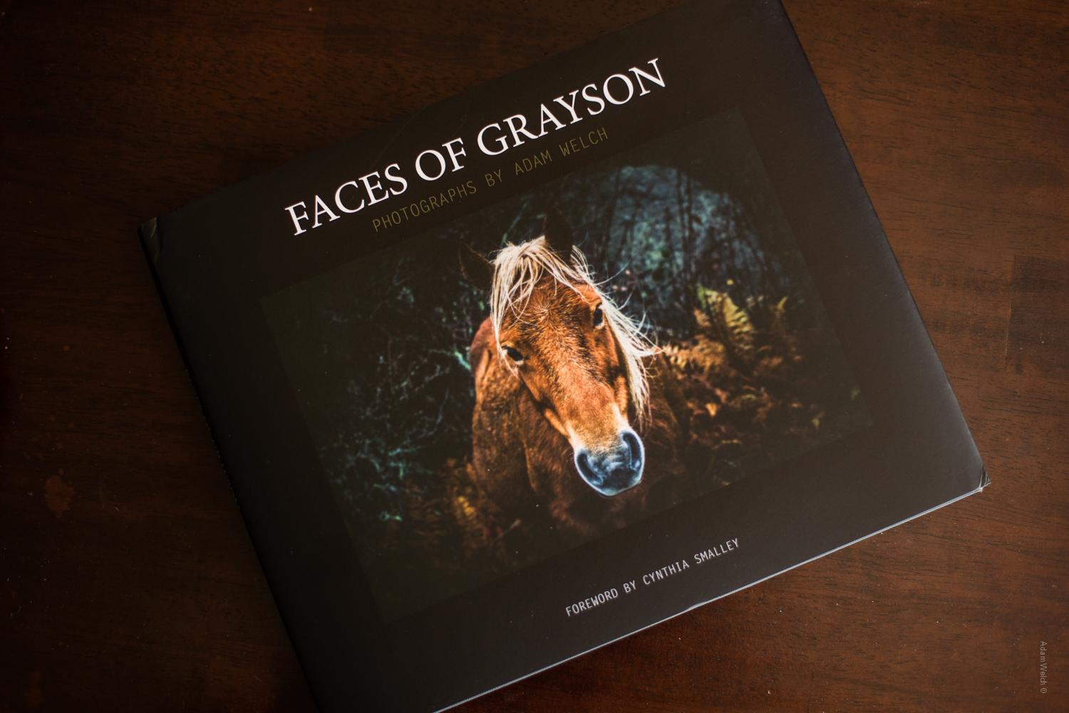 Photo Books: Value and Worth in Today's Digital World