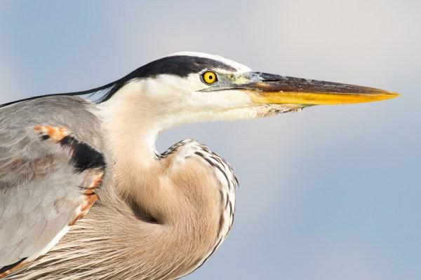 Desafio Semanal de Fotografia - Pássaros
