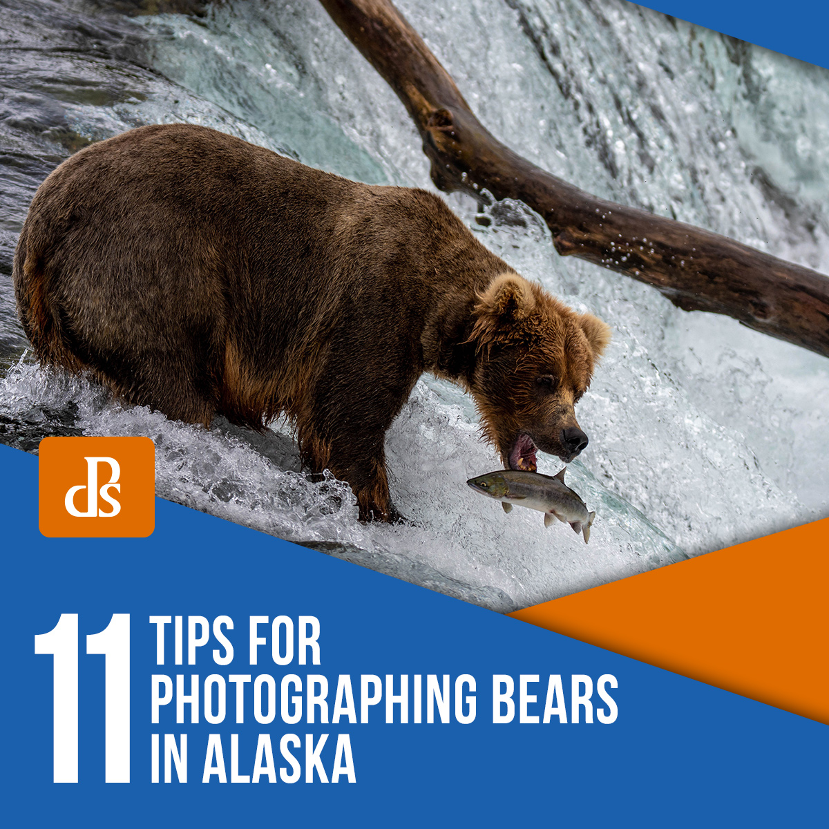 tips-for-photographing-bears-in-alaska