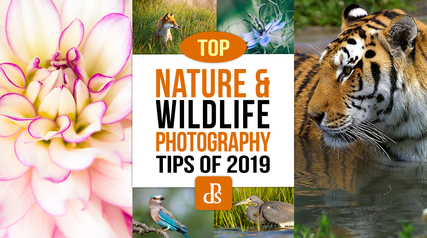https://i2.wp.com/digital-photography-school.com/wp-content/uploads/2020/01/dps-top-nature-and-wildlife-photography-tips-2019.jpg?resize=1500%2C837&ssl=1