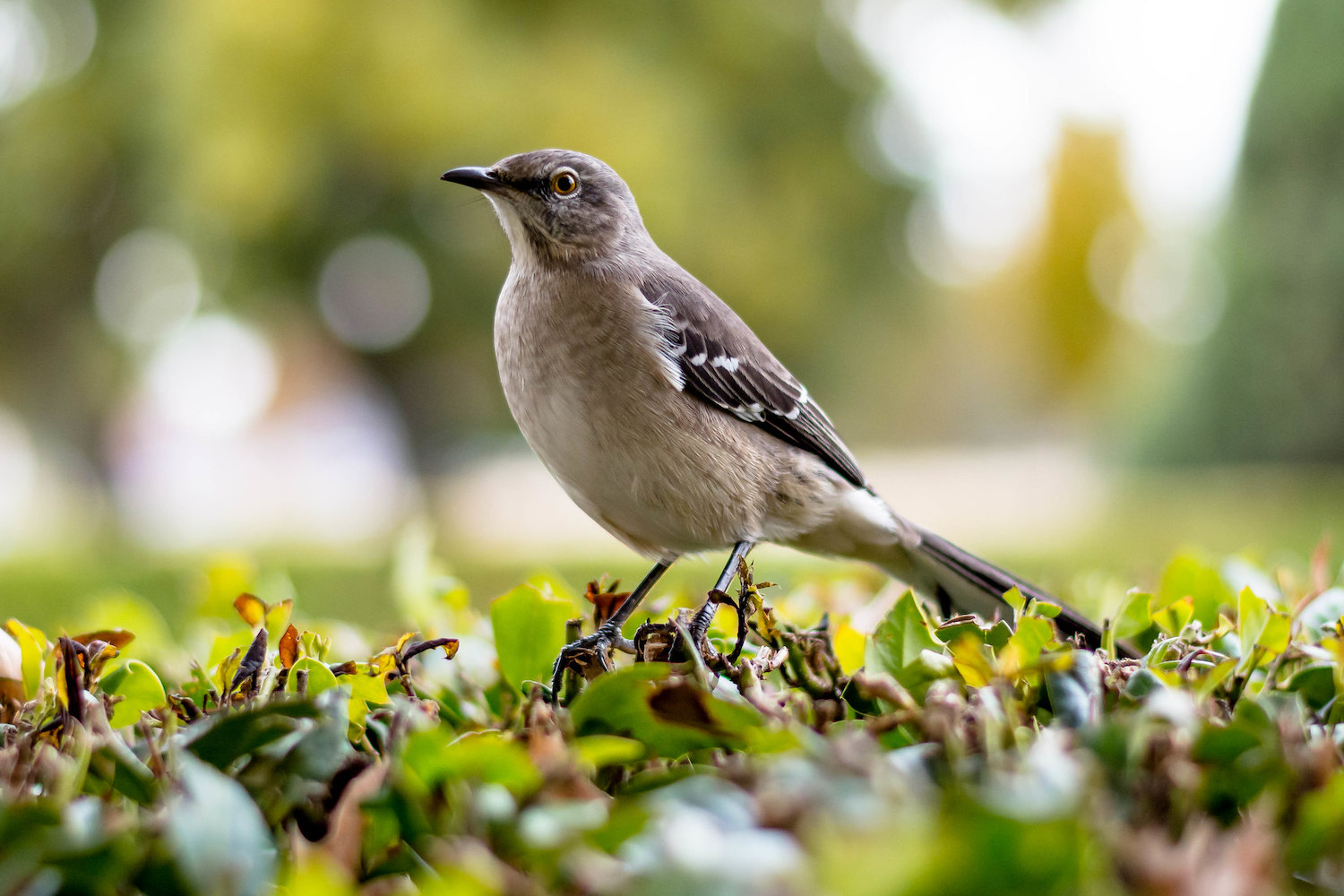 https://i2.wp.com/digital-photography-school.com/wp-content/uploads/2020/01/lightroom-keywords-mockingbird.jpg?resize=1500%2C1000&ssl=1
