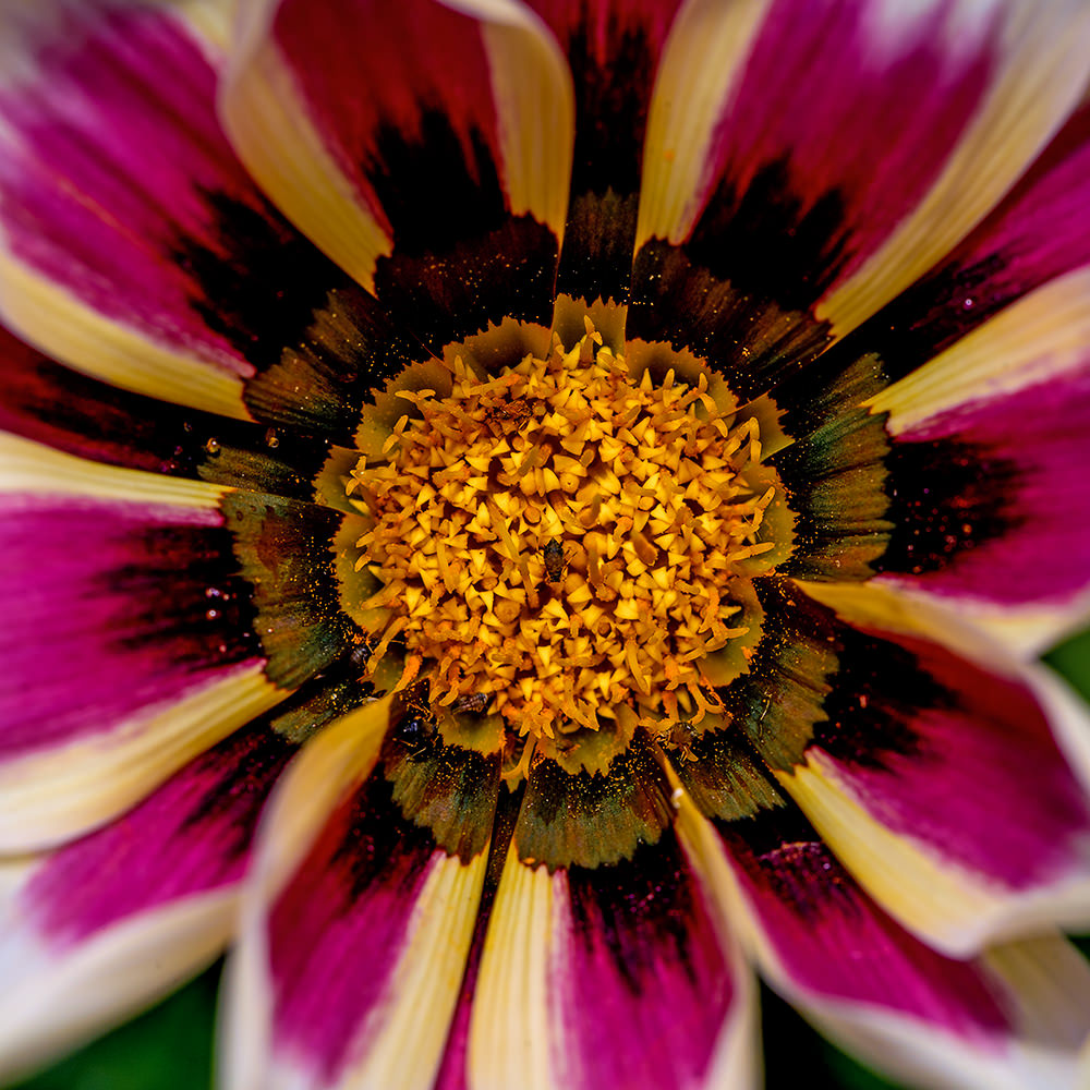 How to Take Vibrant, Razor-Sharp Macro Photos of Flowers