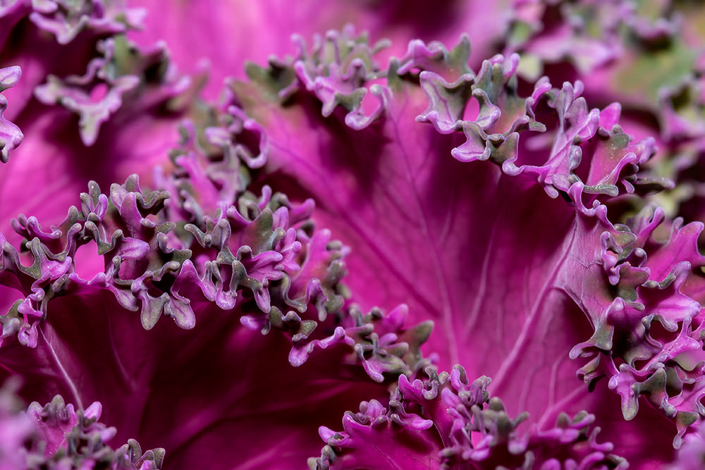 razor-sharp-macro-photos-of-flowers