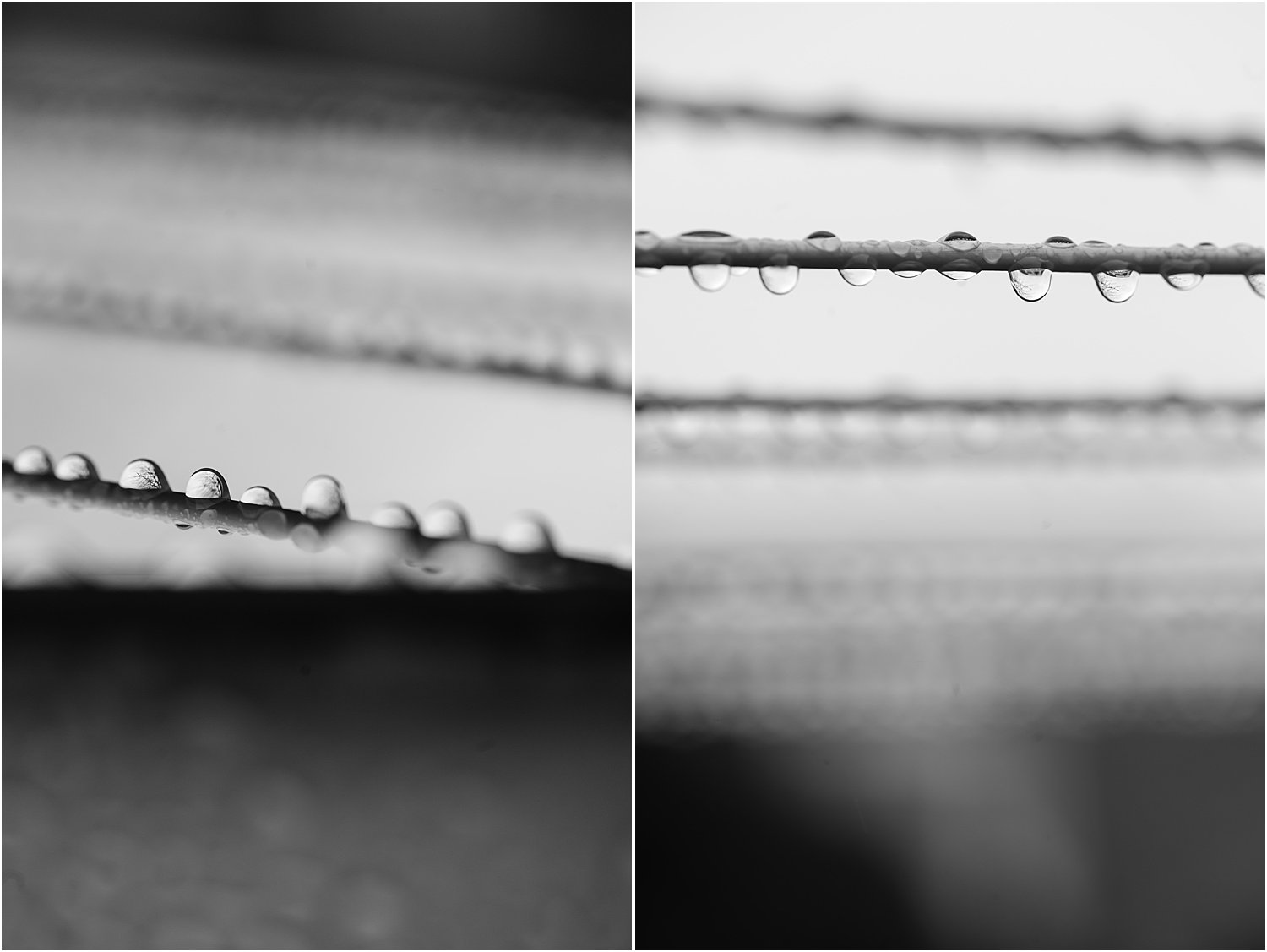 DPS How to use pattern and repetition in photography by Lily Sawyer – dewdrops on lines in balck and white