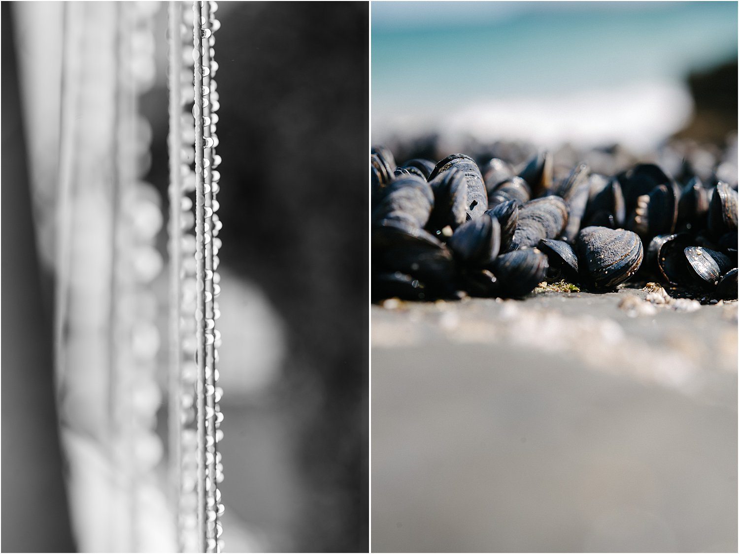 DPS How to use pattern and repetition in photography by Lily Sawyer – Dewdrops on a string and seashells on a beach