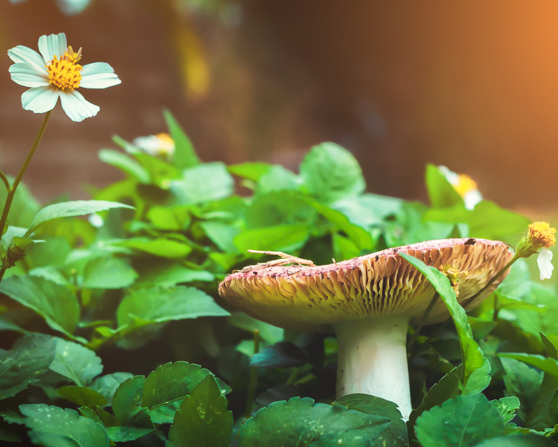 Aspect ratio in photography - mushroom image in 5:4 format.