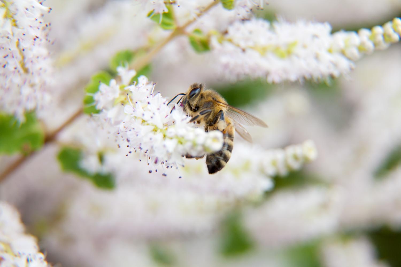 Bee em modo burst