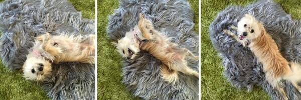 Weekly Photography Challenge – Pets