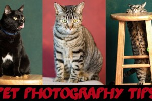 Pet Photography 101 – video