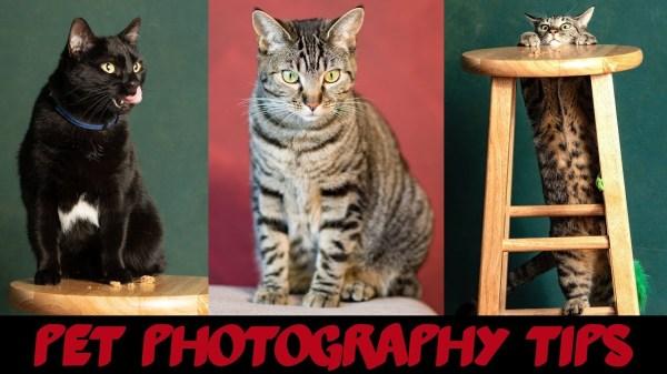 Pet Photography 101 – video