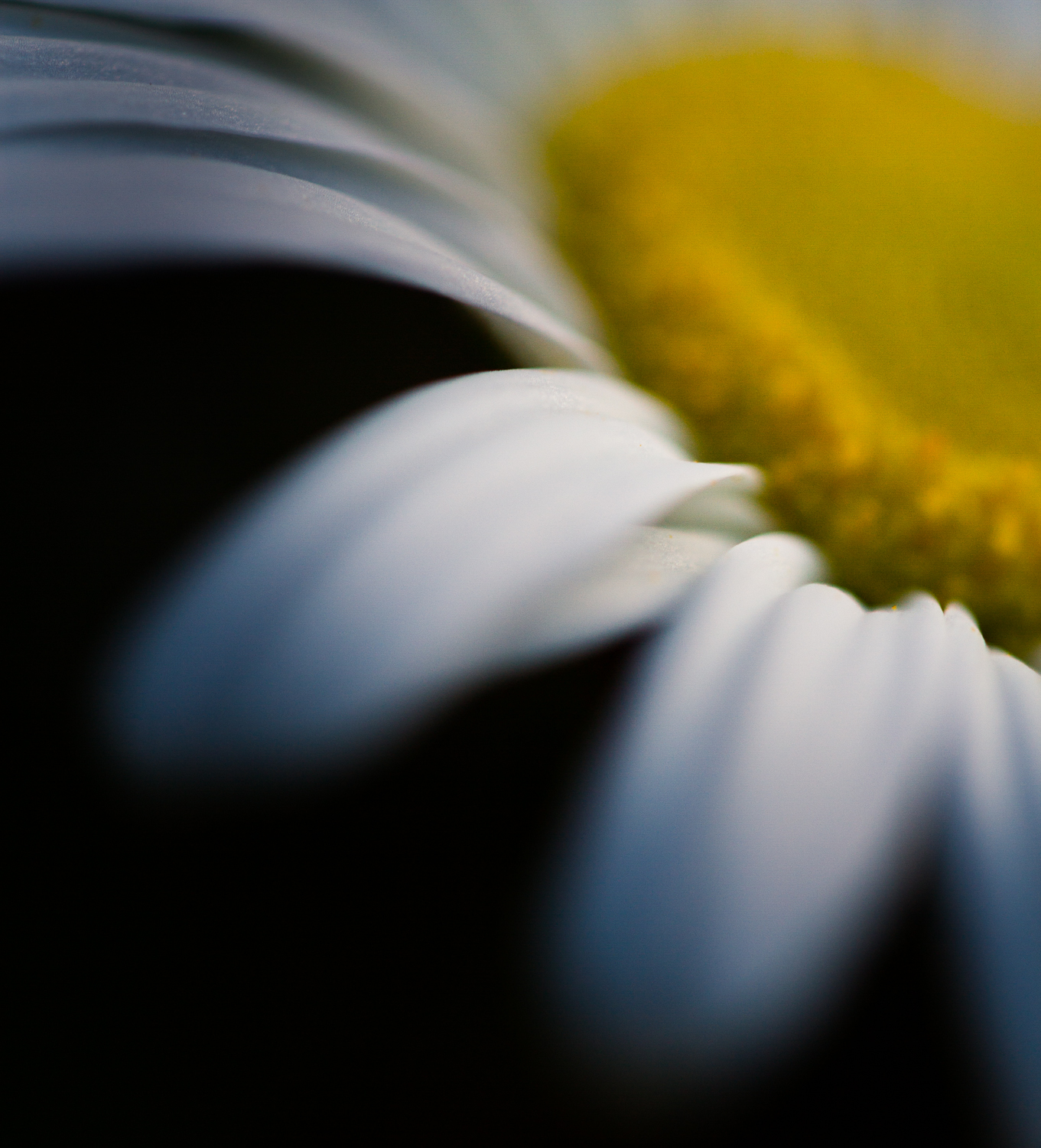 photography while social distancing –abstract still life flower