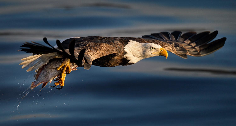 A bird in flight. Photo by Photographers Bob and Dawn Davis