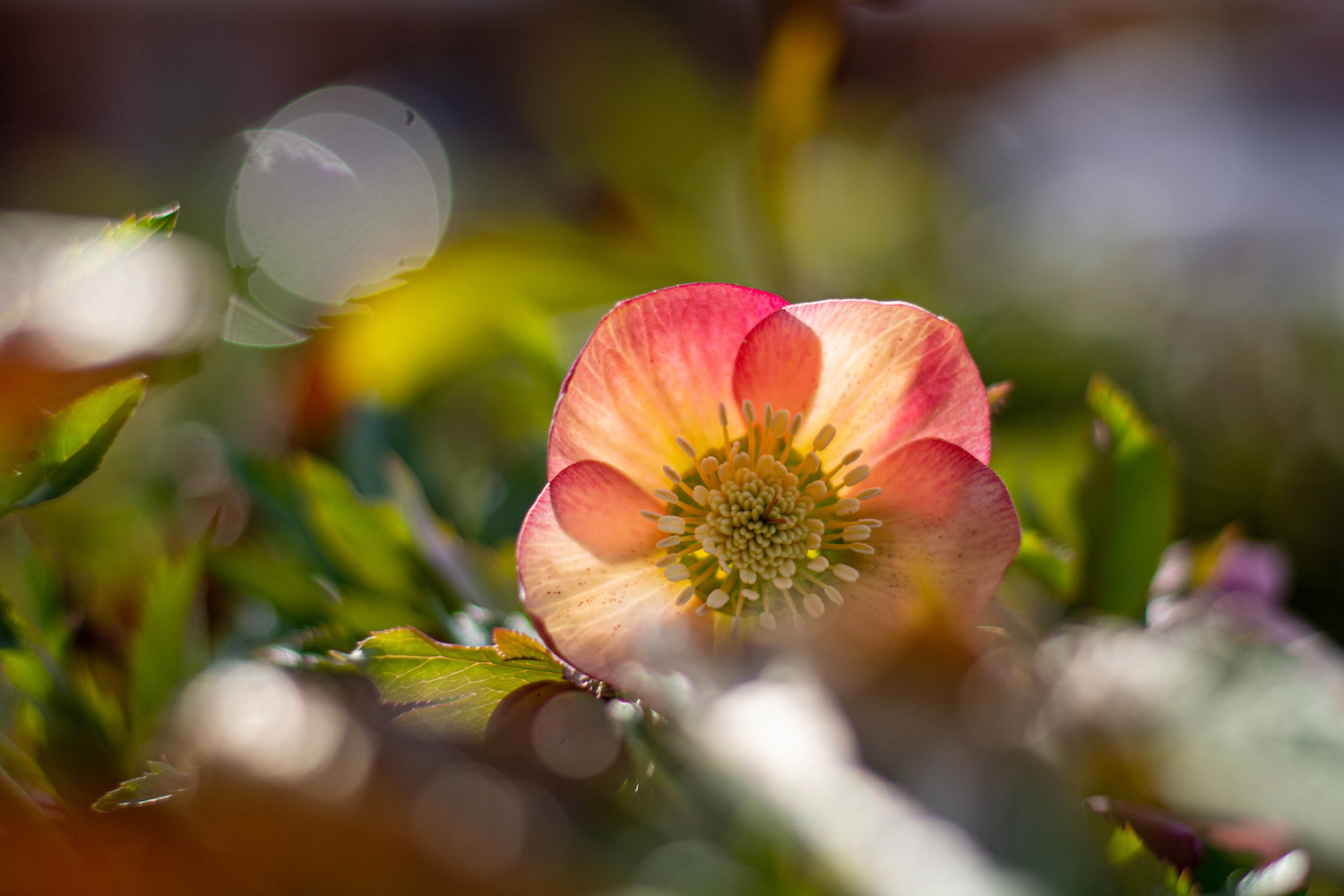 beginner photography tips – a close-up photo of a flower with backlight