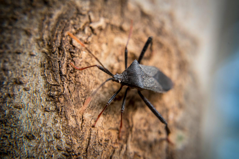 backyard photo safari insect on tree