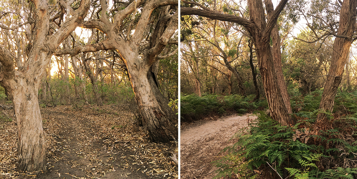Desafio Semanal de Fotografia - Árvores