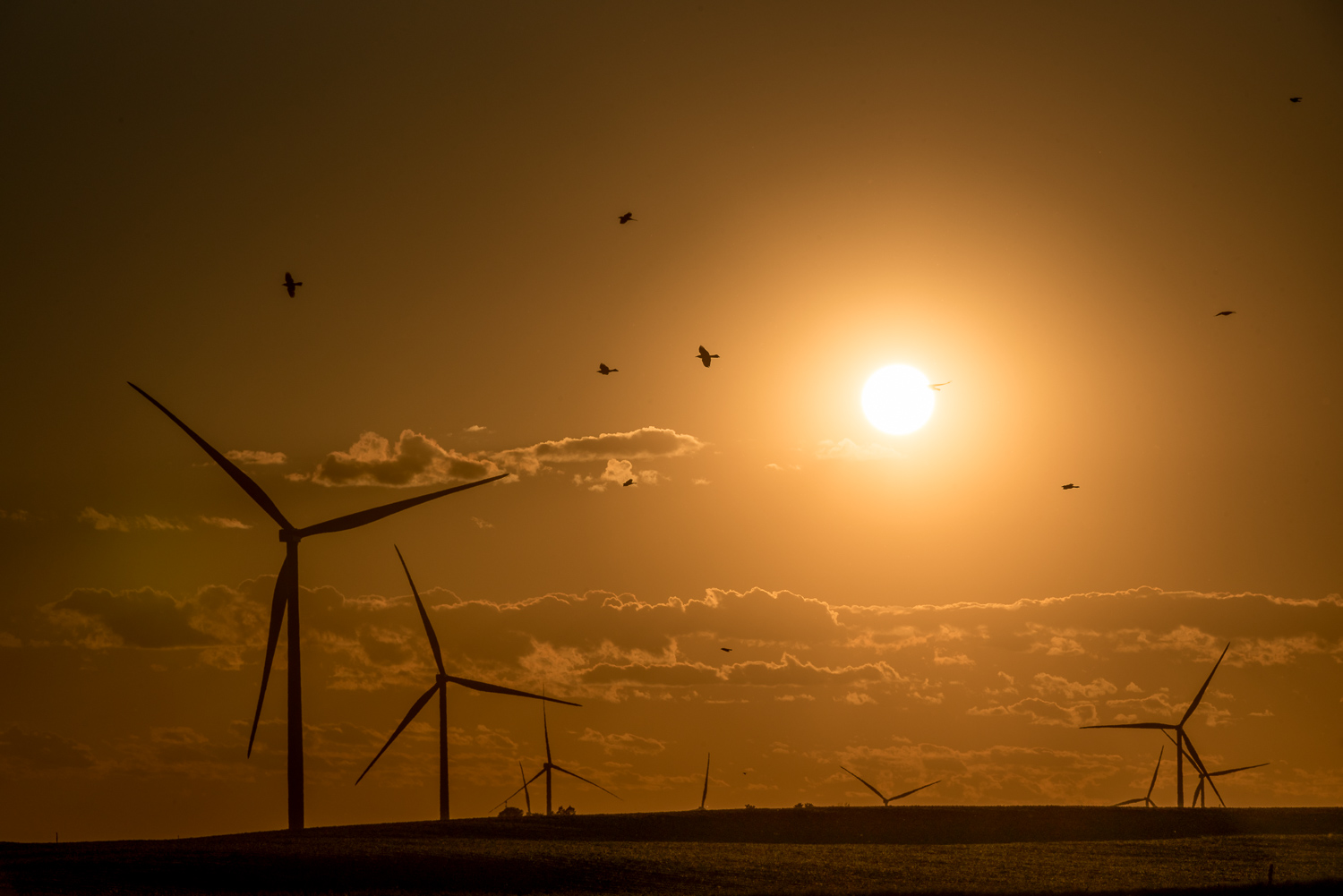 Lightroom Mobile Share Your Edit Feature Sunset Wind Turbines