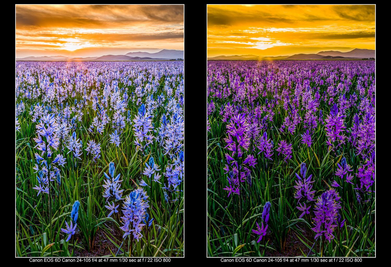 Use the Lightroom Hue Control for landscape images