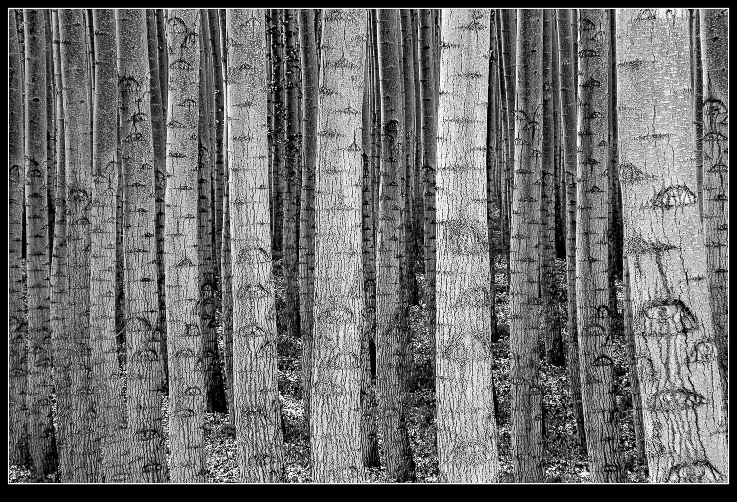 Focus-stacked forest