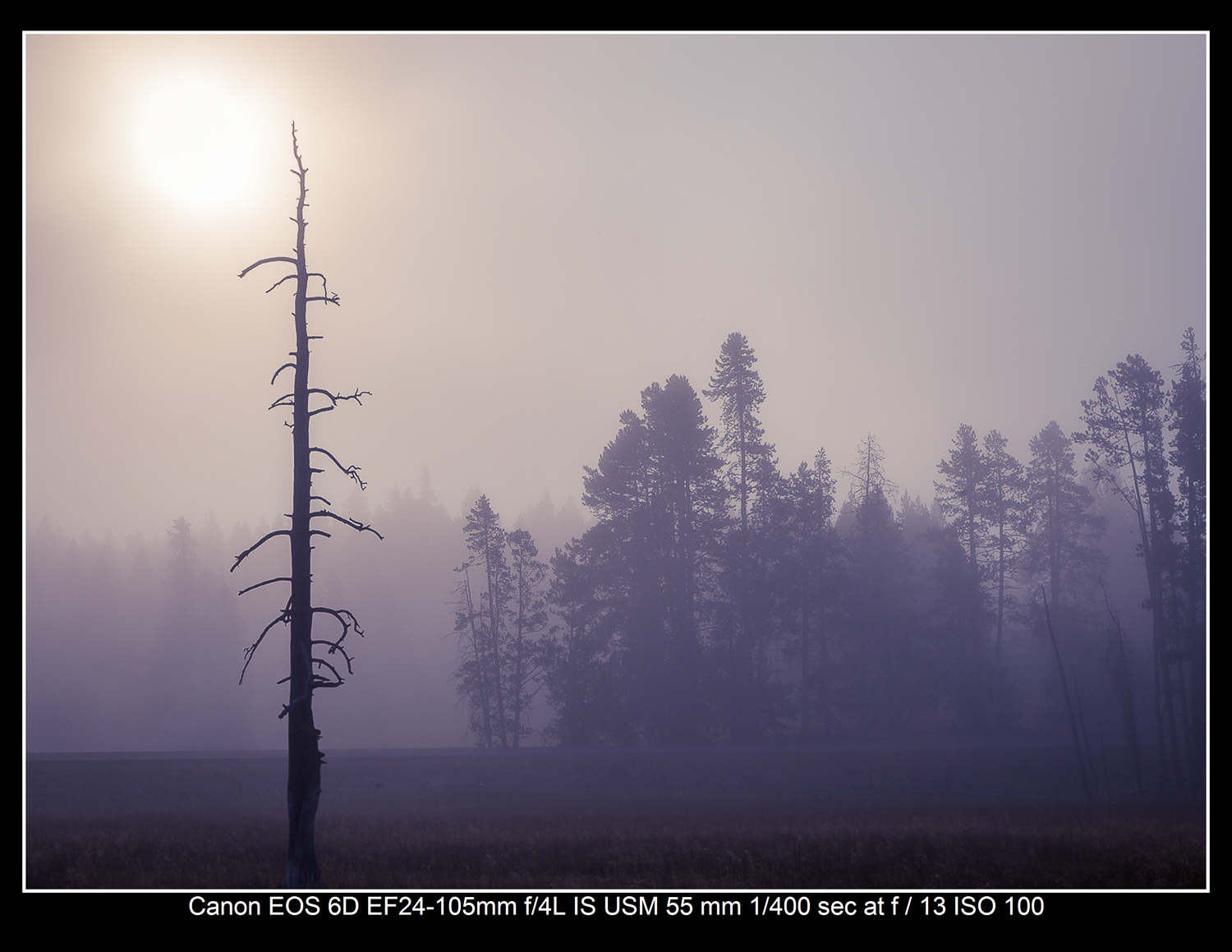 Foggy trees in Yellowstone National Park.