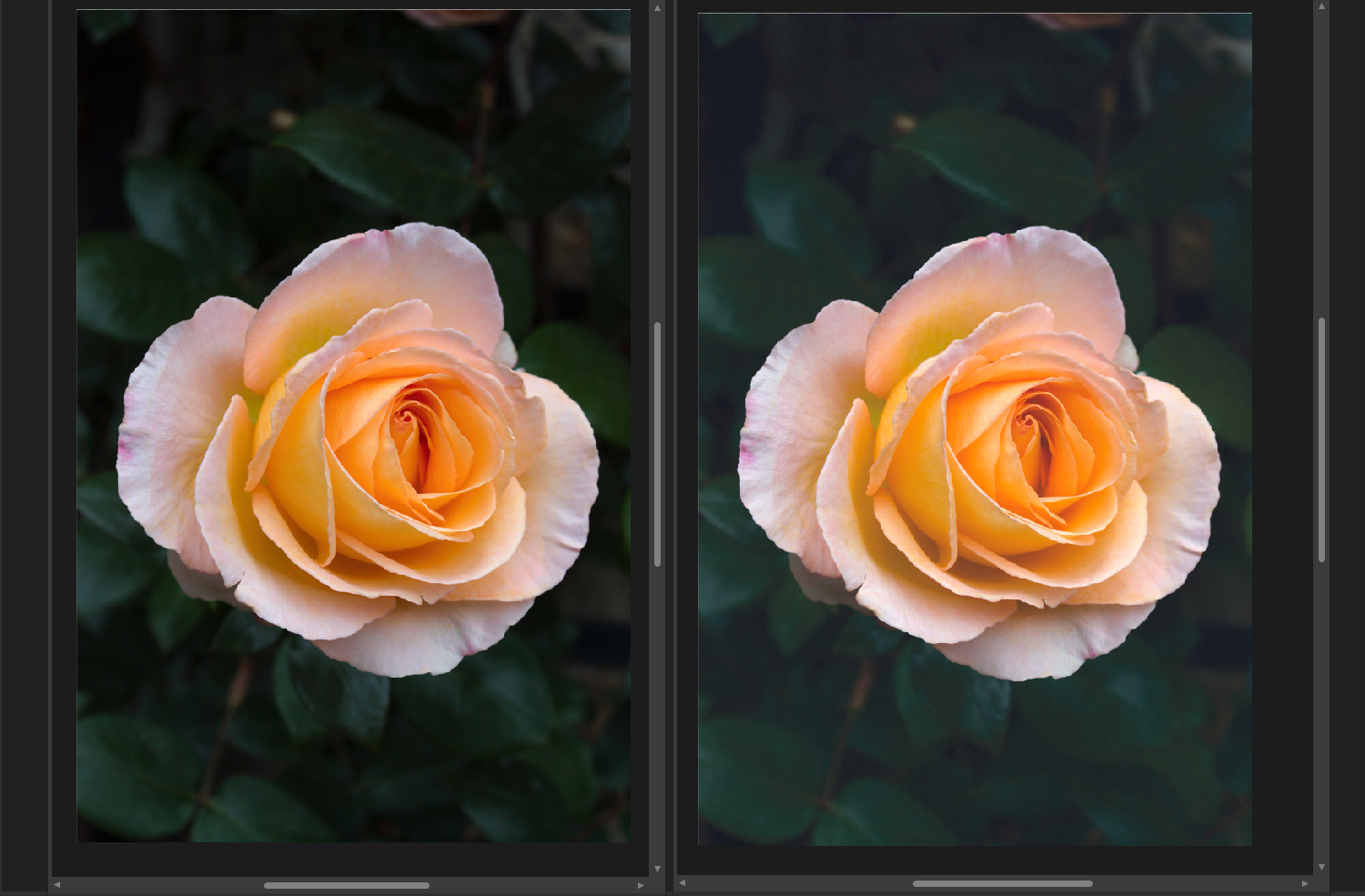 Duplicate images in Affinity photo side by side
