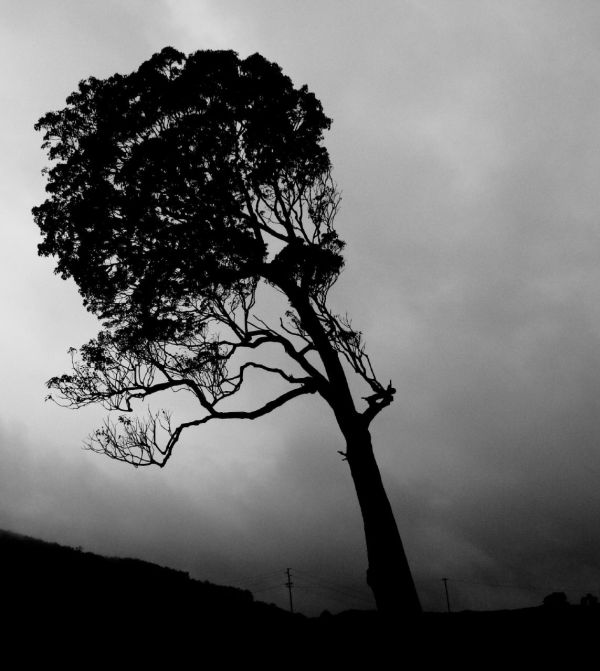 Weekly Photography Challenge – Dark & Moody