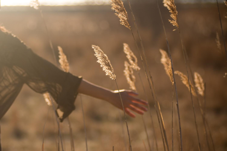 woman's arm in field