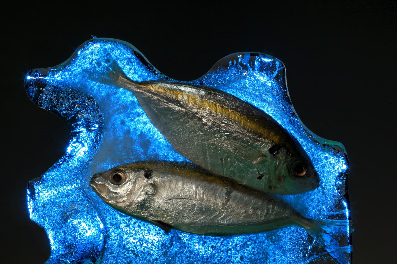 peixe congelado no gelo