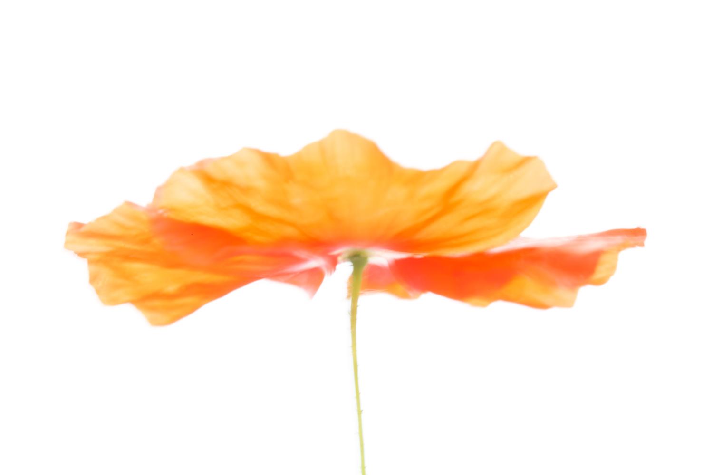 modo de prioridade de abertura e modo de desfoque de prioridade do obturador de flores