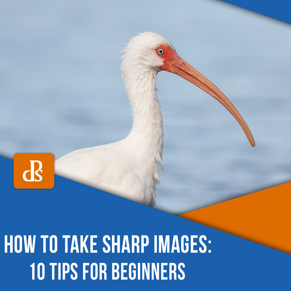 taking sharp images ibis
