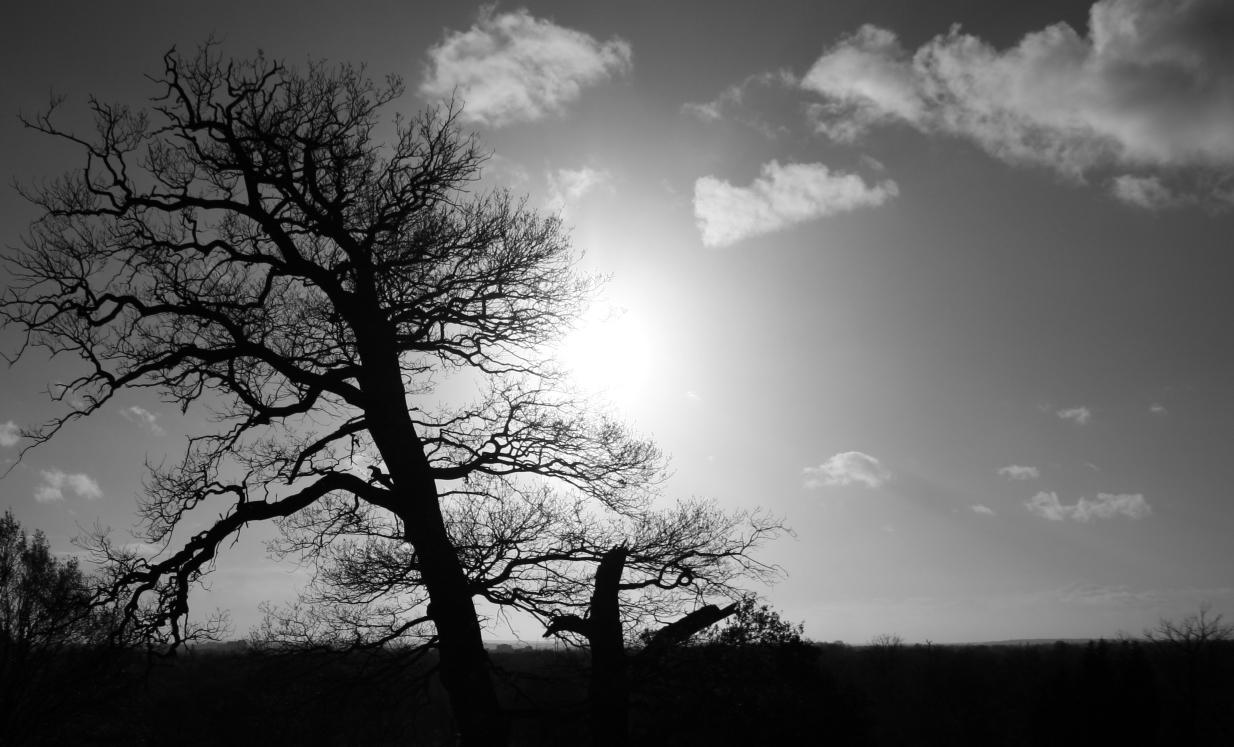 Foto em preto e branco de uma árvore
