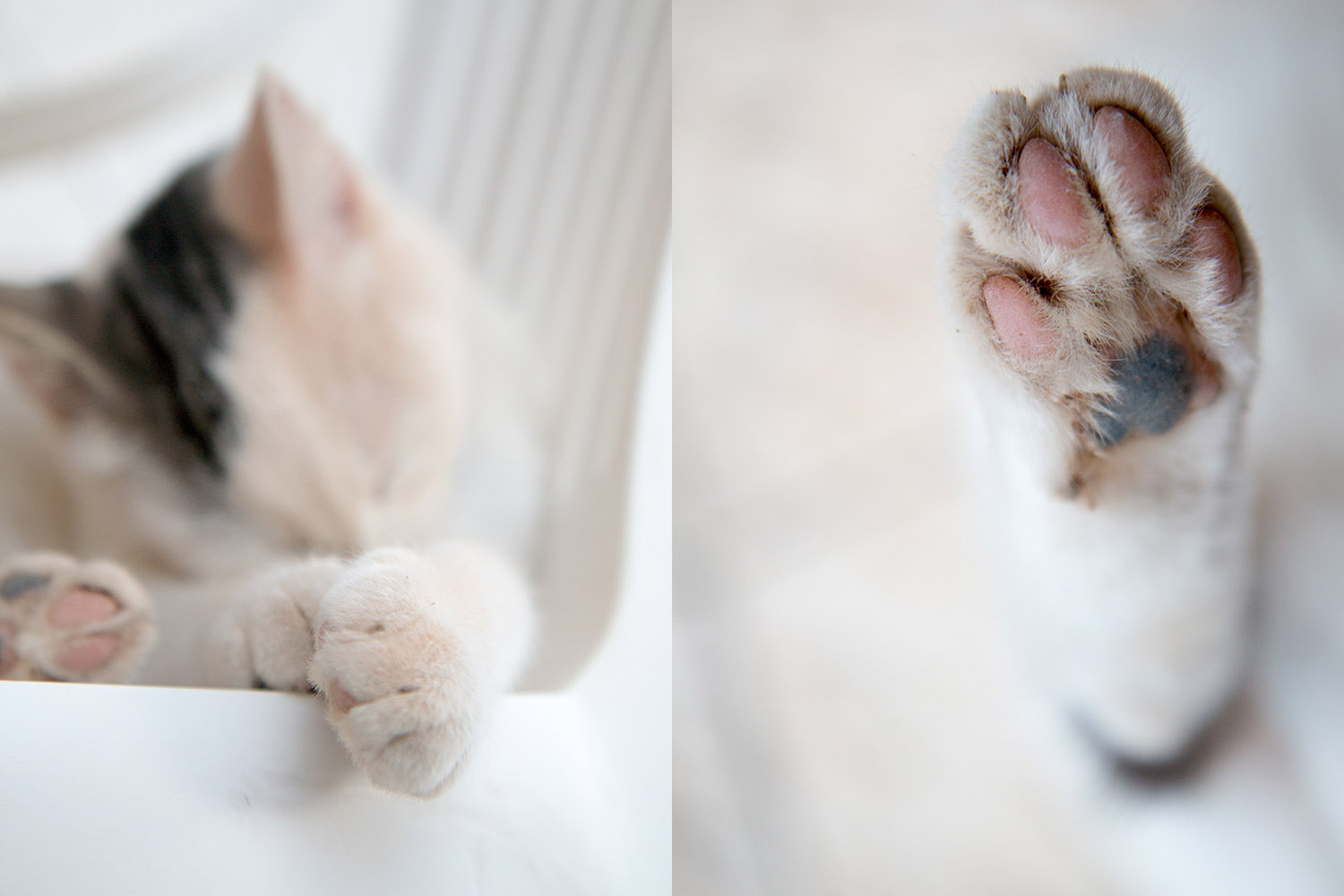 cat paws cat photography ideas