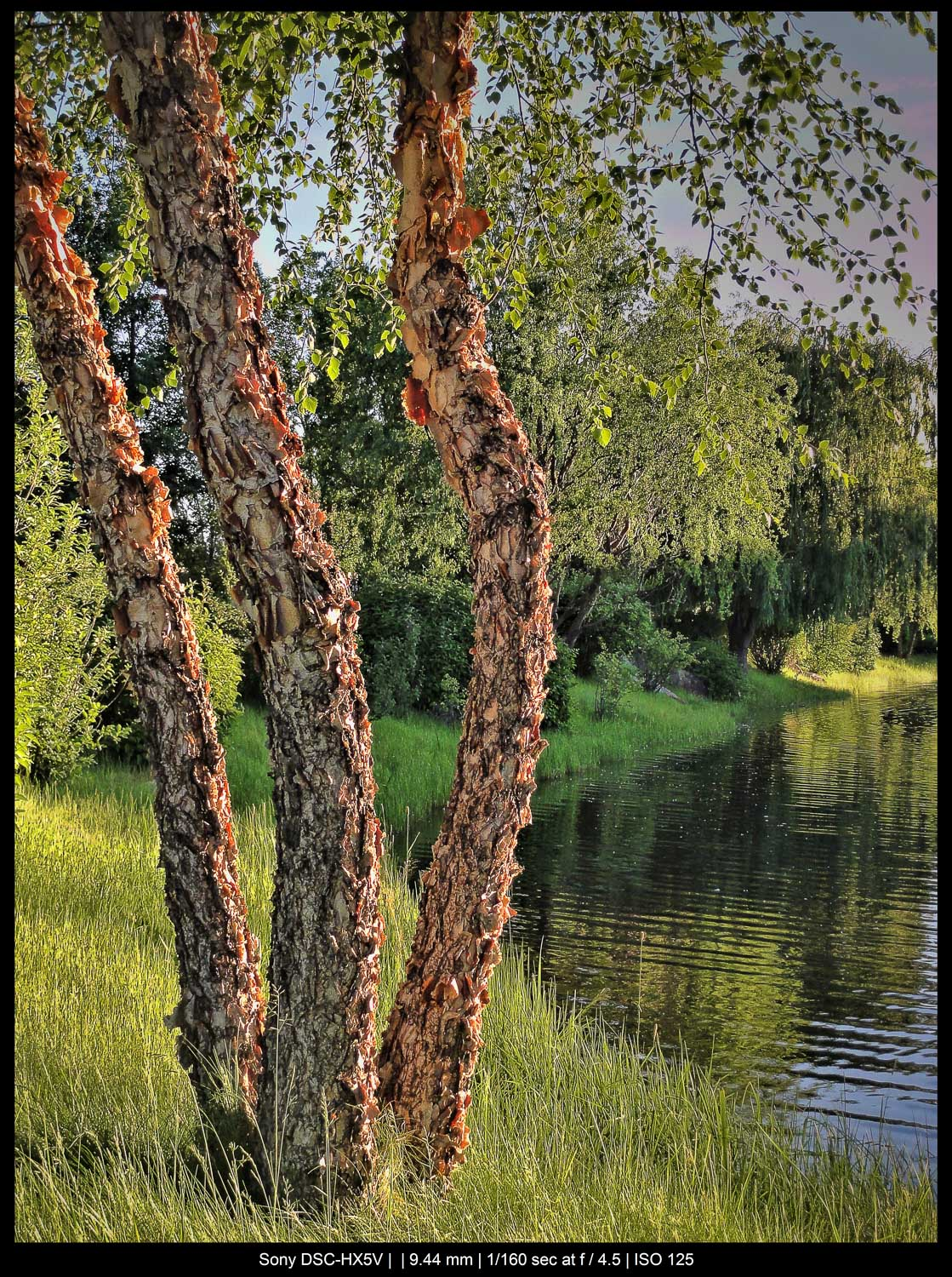 tree before a lake