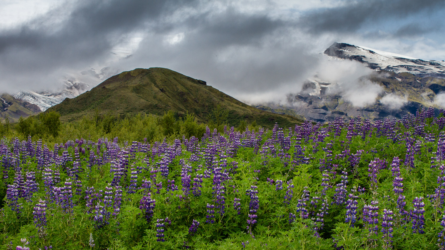 mountain landscape photography foreground flowers with mountains in the background