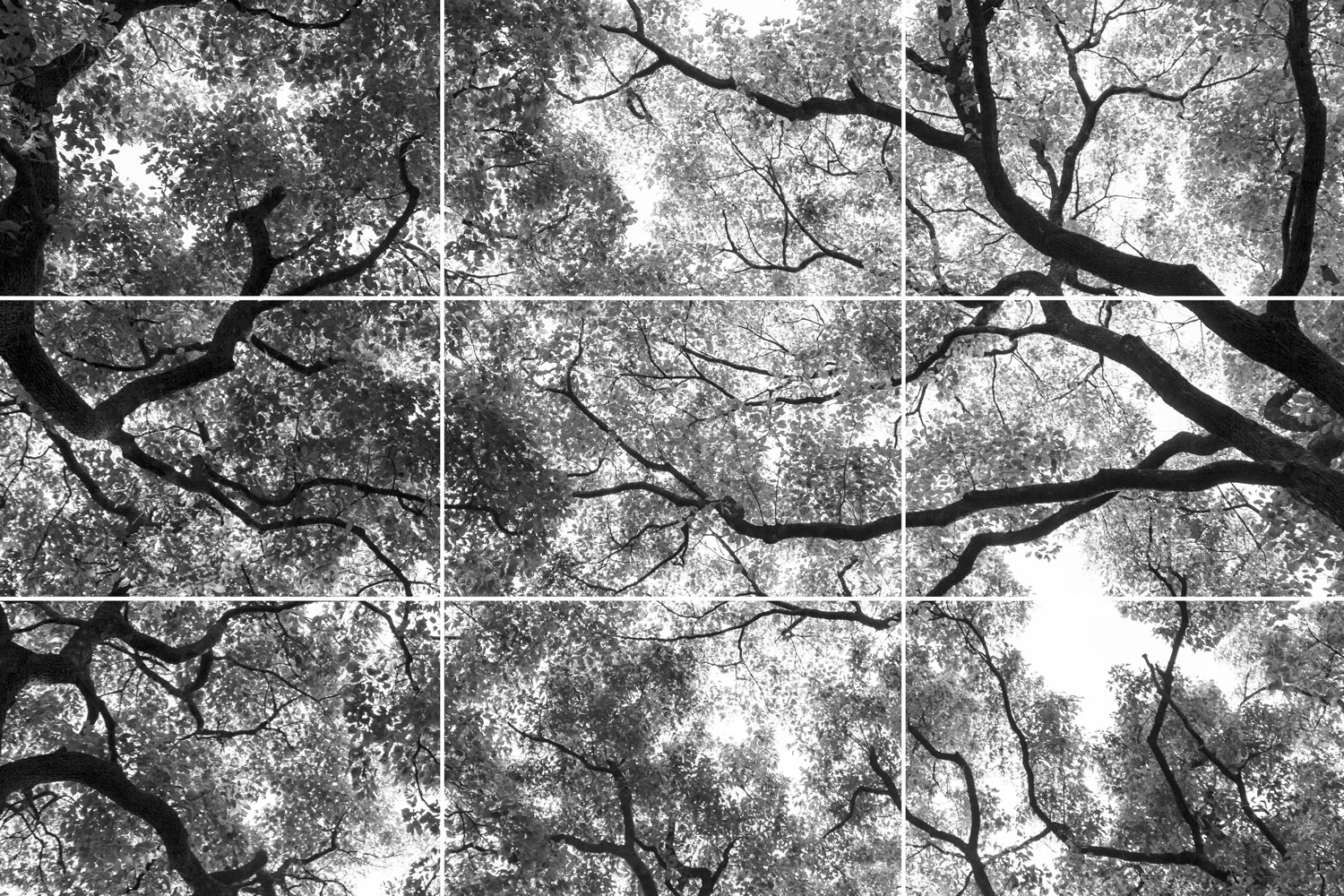 Rule of thirds examples - a canopy of tree branches and leaves
