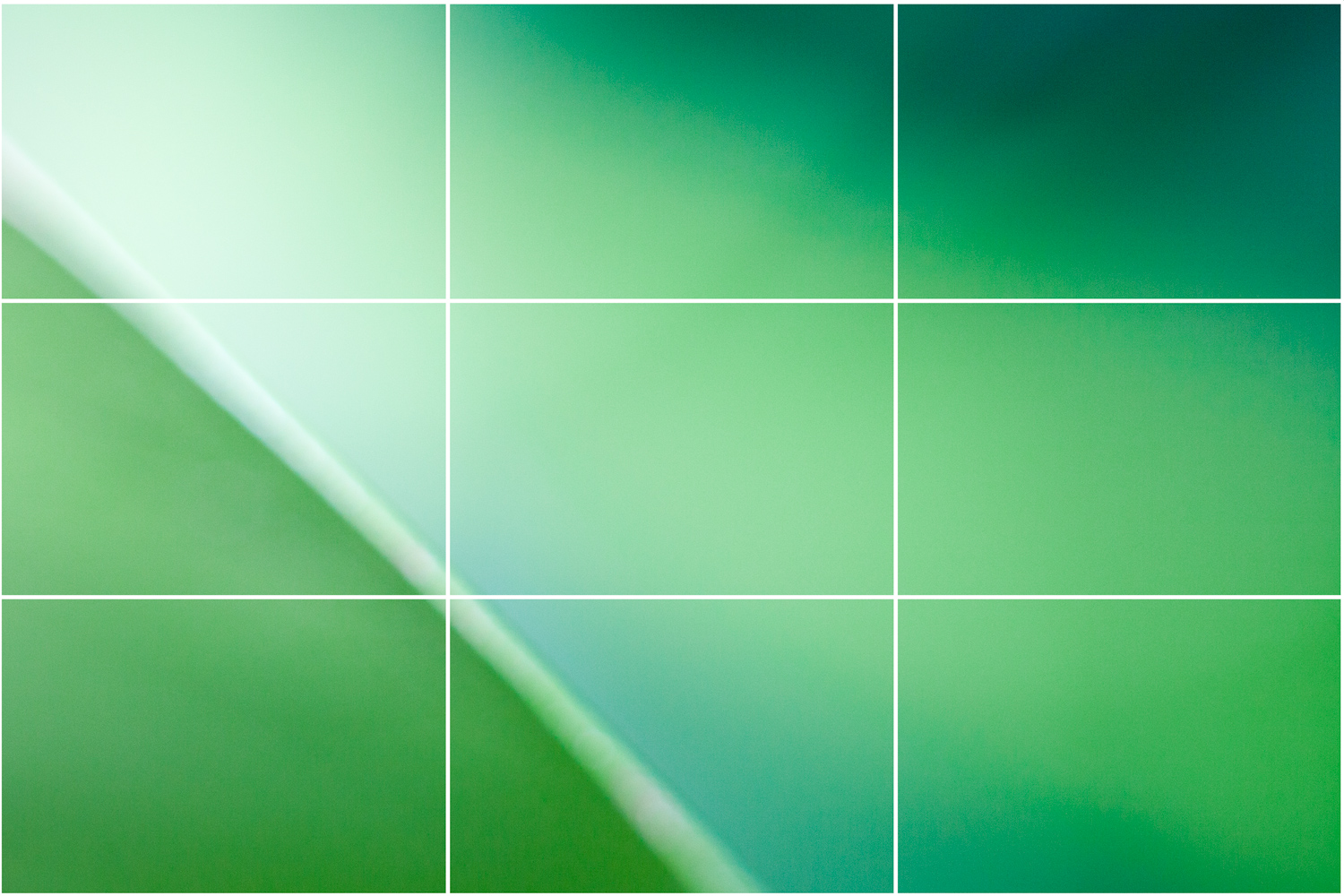 Rule of thirds examples - an abstracted image of a leaf